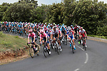 The peloton during Stage 1 of the Route d'Occitanie 2019, running 175.5km from Gignac-Vallée de l'Hérault to Saint-Geniez-d'Olt-et-d'Aubrac , France. 20th June 2019<br /> Picture: Colin Flockton | Cyclefile<br /> All photos usage must carry mandatory copyright credit (© Cyclefile | Colin Flockton)