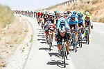 The peloton in action during Stage 7 of the La Vuelta 2018, running 185.7km from Puerto Lumbreras to Pozo Alc&oacute;n, Spain. 31st August 2018.<br /> Picture: Unipublic/Photogomezsport | Cyclefile<br /> <br /> <br /> All photos usage must carry mandatory copyright credit (&copy; Cyclefile | Unipublic/Photogomezsport)