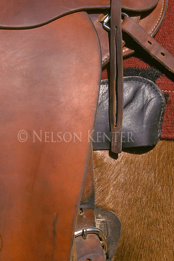 A close up view of a horse with saddle