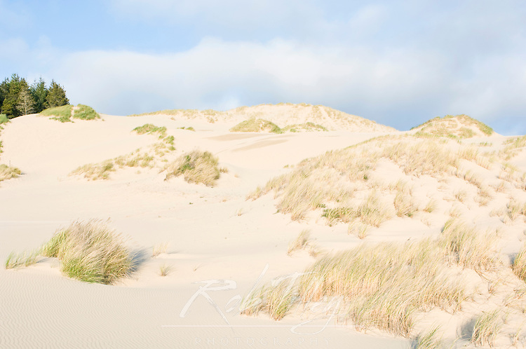 USA, OR, Siuslaw NF, Oregon Sand Dunes near Florence