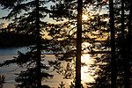 Winter sunset through evergreen trees on the shore of a frozen Hayden Lake in winter.