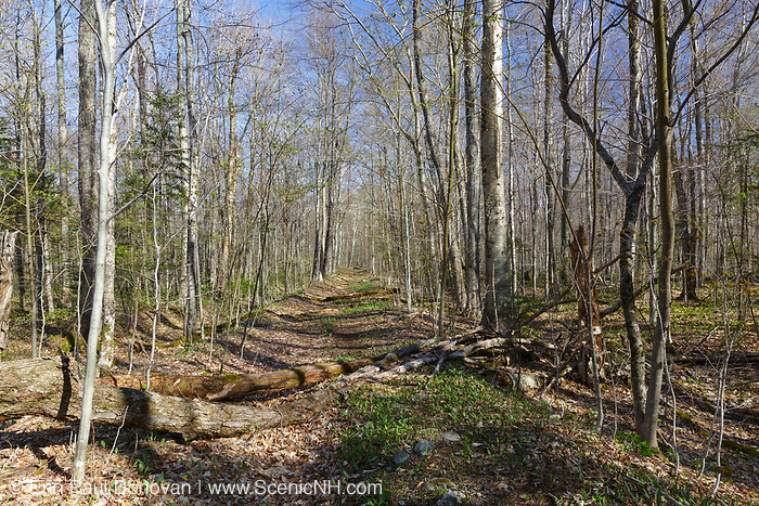 Remnants of the Little River Railroad in Bethlehem, New Hampshire USA. This was a logging railroad owned by George Van Dyke and was in operation from 1893 - 1900