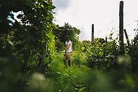 Torino 10 Maggio 2020<br /> <br /> Photo: Federico Tardito / 1+9 images / Insidefoto  <br /> <br /> Vigna della Regina - Torino - 18/05/2020. <br /> <br /> Riprendono oggi i lavori di manutenzione della Vigna della regina. Il vigneto storico risalente agli inizi del seicento ed affacciato sulla città di Torino è stato recuperato e reimpiantato nel 2003 ed affidato alla azienda Balbiano.<br /> <br /> Nella foto: Operai al lavoro nella vigna <br /> La mascherina protettiva non è obbligatoria nei lavori in campagna.<br /> <br /> <br /> <br /> Turin,Italy 18th of May, Vigna della Regina<br /> <br /> <br /> Maintenance work on the Queen's vineyard resumes today. The historic vineyard dates back to the early 17th century. it has a wonderful view over the city of Turin. it was recovered and replanted in 2003 and entrusted to the Balbiano company.<br /> <br /> In the picture: Farmers at work in the vineyard. The protective mask is not mandatory when working in the countryside.