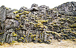 Moss on lava rock at Thingvellir