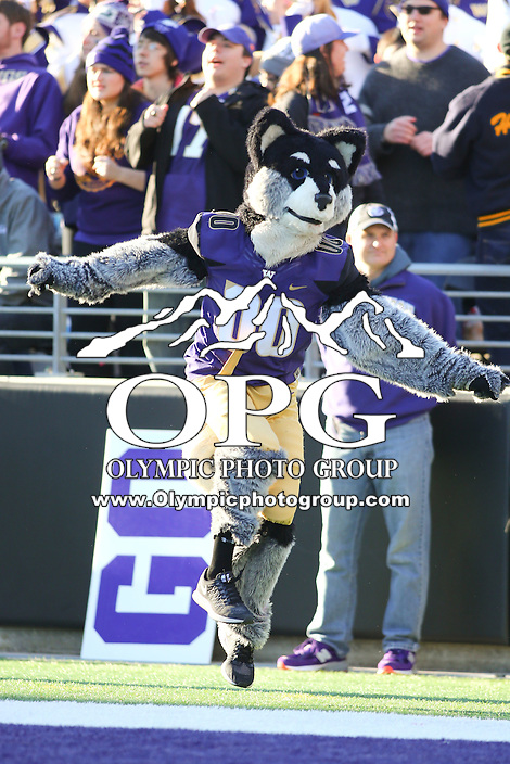 Nov 27:  Washington's mascot Harry against Washington State.  Washington defeated Washington State 45-10 at Husky Stadium in Seattle, WA.