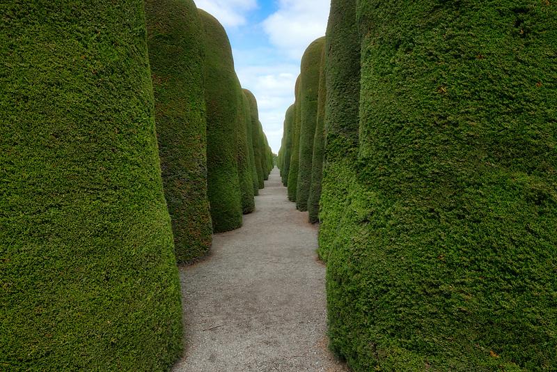 Punta Arenas Cemetary. Punta Cypress trees walkway. Arenas, Chile.