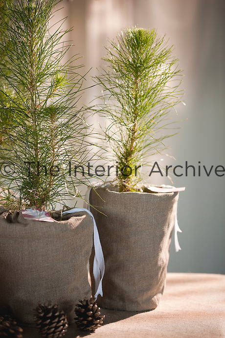 Miniature fir trees tied in grey linen arranged with some small pine cones are used as table decorations