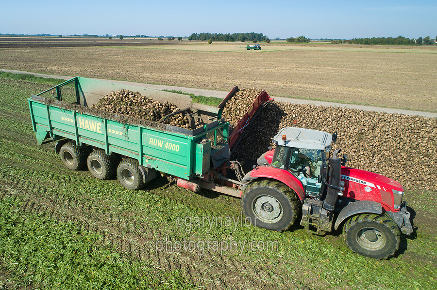 Harvesting sugar beet - Lincolnshire, September