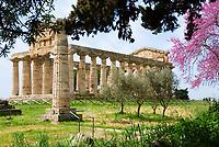 ITA, Italien, Kampanien, Paestum: von griechischen Kolonisten im 7. Jh. v. Chr. erbaute Tempelstadt Poseidonia - hier der Cerestempel, wird heute der Goettin Athene zugeordnet | ITA, Italy, Campania, Paestum: temple of Ceres - today Athene Temple