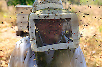 Le chef d'équipe est une femme. Neyda Batista is 50 years old; she has been working with bees for 14 years. In equatorial America, before the arrival of the Africanized bees, professional beekeepers had a stock of 1000 to 2000 ruches. Since they have been working with the Africanized bee, the beekeepers' average stock is 300 hives because managing the colony is difficult due to this hybrid bee's aggressiveness.///Le chef d'équipe est une femme. Neyda Batista a 50 ans, elle travaille avec les abeilles depuis 14 ans. En Amérique équatoriale, avant l'arrivé des abeilles africanisées, les apiculteurs professionnels avaient un cheptel de 1000 à 2000 ruches. Depuis, qu'ils travaillent avec les africanisées, le cheptel moyen des apiculteurs est de 300 ruches pour la raison que la gestion des colonies est devenue difficile à cause de l'agressivité de cet hybride.