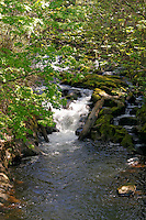 Rushing water in Whatcom Creek, Maritime Heritage Park, Bellingham, Washington state, USA