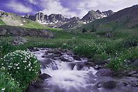 Mountain stream and wildflowers, Heartleaf Bittercress,Cardamine cordifolia, Ouray, San Juan Mountains, Rocky Mountains, Colorado, USA, July 2007