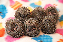 08/07/16<br />