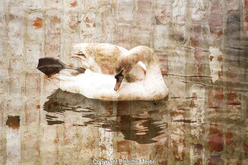 swan digital altered