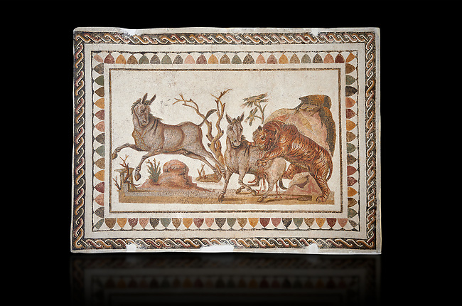 Picture of a Roman mosaics design depicting a lion attacking two onagers or Asiatic wild ass, from the ancient Roman city of Thysdrus. 3rd century AD. El Djem Archaeological Museum, El Djem, Tunisia. Against a black background