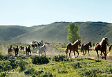USA, Wyoming, Encampment, wranglers jingle horses in horses in the early morning, AbarA Ranch