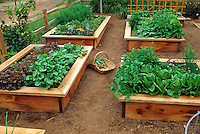 Raised bed vegetable garden in small space front yard.