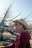 USA, California, Mammoth, one cowboy watches intently as the livestock gets wrangled at Tatum Ranch in Bishop