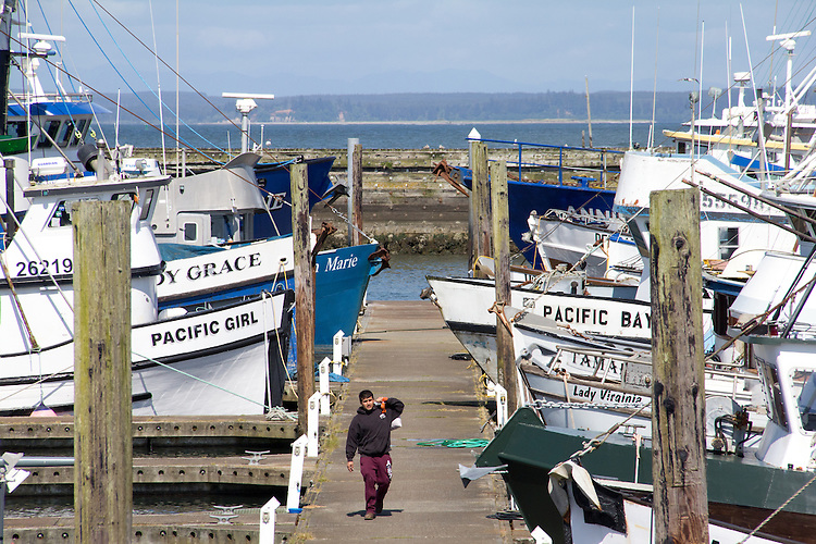 Washington Coast, Westport, commercial fishing boats, Port of Westport, Grays Harbor County, Southwest Washington, Washington State, Pacific Northwest, USA,