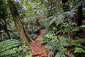 Forêt des Monts Koghis, Nouvelle-Calédonie