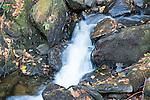 Small Tumbling Honey Brook