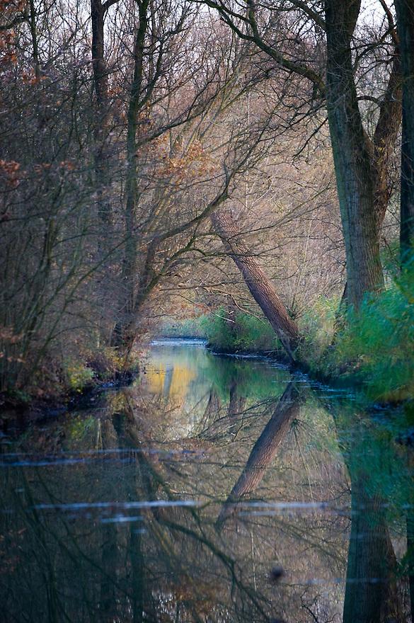 Nederland, Lienden, 13 nov 2008.Bos in uiterwaarde van de Nederrijn met mooie herfstkleuren en sloot met weerspiegeling van de bomen...Foto (c) Michiel Wijnbergh
