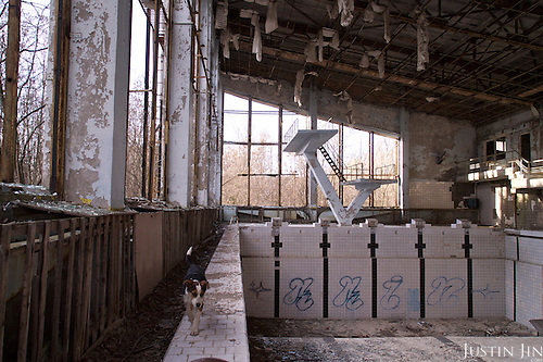 A swimming pool in Pripyat, a ghost town left deserted by the nuclear disaster in the Chernobyl power station nearby. 30 years on, the city is still heavily contaminated, unfit for human life. <br /> <br /> The Chernobyl nuclear disaster happened on 26 April 1986.