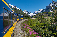 Alaska railroad passenger car rounds a bend in the Chugach National Forest, Kenai Peninsula, Alaska.