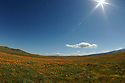 Antelope Valley, CA poppy field. Photo by, Karie Henderson © 2011