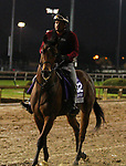November 01, 2018 : Big Drink Of Water in preparation for the Breeders' Cup on November 01, 2018 in Louisville, KY.  Candice Chavez/ESW/CSM