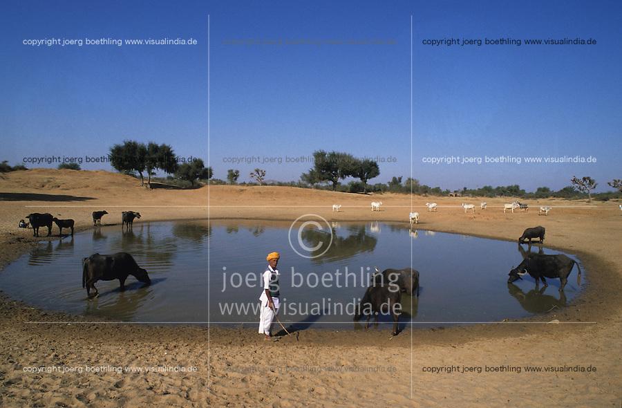 INDIA Rajasthan, Tilonia, shepherd and cattle at water hole / INDIEN Rajasthan, Tilonia, Hirten traenken Vieh an einer Wasserstelle in Steppe