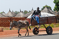 MALI , Bougouni, Bauern transportieren Baumwolle mit Eselskarren | .MALI , Bougouni , farmer transport cotton from field with donkey cart