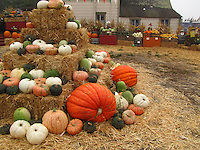 Pumpkins of all sizes, shapes and colors, displayed at Pumpkin Depot in Half Moon Bay.