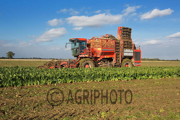 Holmer self-propelled sugar beet harvester working in Lincolnshire.Picture by Tim Scrivener date taken 10th October 2012.mobile 07850 303986 e-mail tim@agriphoto.com.....covering agriculture in The United Kingdom....