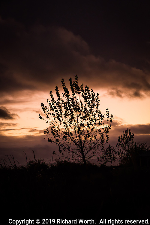 A tree in silhouete at sunset, most of its leaves gone leaving bare branches, but also some hearty leaves, clinging on.