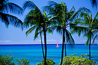 Fluid, peaceful shot of a pink sailboat heading out on a blue sea framed by lush coconut palms and green naupaka