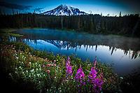 Wildflowers of Mt. Rainier