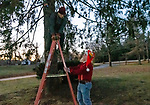 BETHLEHEM, CT. 07 December 2018-120718 - Bob Smith of Bethlehem, better know as the Silent Santa because of his work with deaf children, right, and his helper Walt of Morris, make final preparations to the big tree during the annual Christmastown Festival on the Town Green in Bethlehem on Friday. Bill Shettle Republican-American
