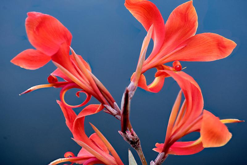 Close up of tropical Flower. Lanai, Hawaii