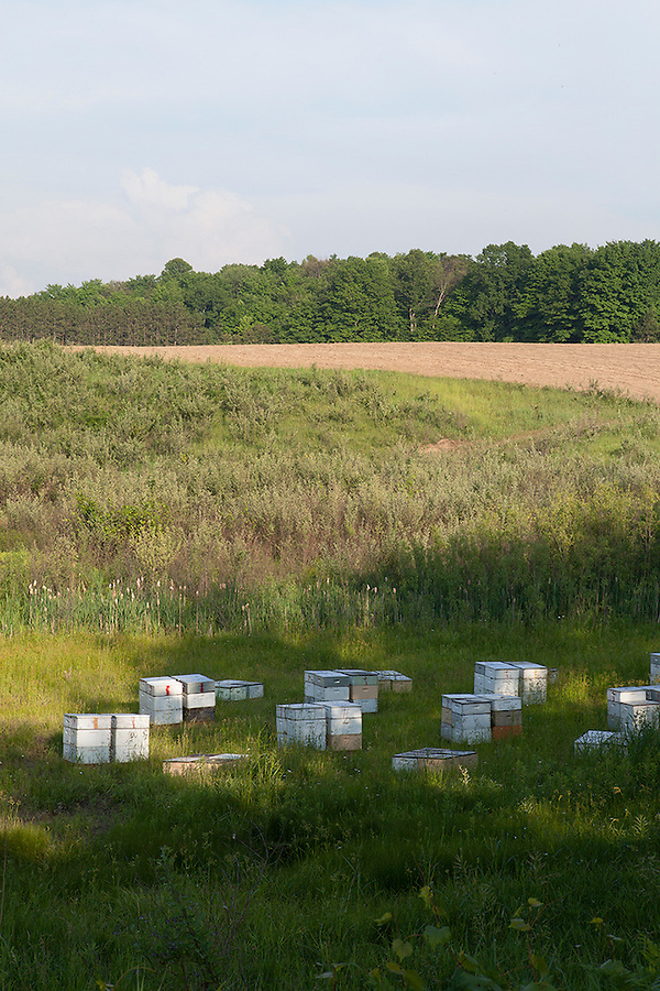 Nucleus hives (nucs) for bees in Williamsburg, Michigan, near Traverse City