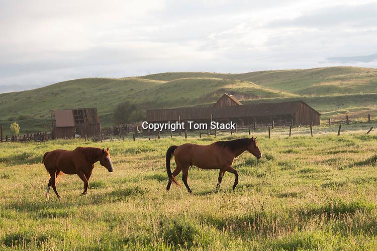 A pair of horses on a ranch at dawn