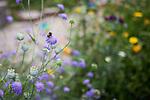 © Joel Goodman - 07973 332324 . 27 July 2013 . Hulme Community Garden Centre , Old Birley Street , Hulme , Manchester M15 , UK . Bees in the garden . Hulme is Where the Art Is festival . Photo credit : Joel Goodman