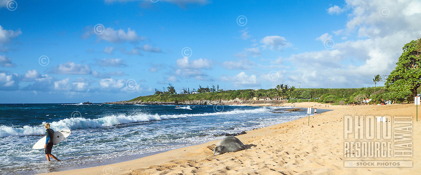A Hawaiian monk seal rests at H'ookipa Beach on Maui; a surfer keeps his distance as he wades into the water.