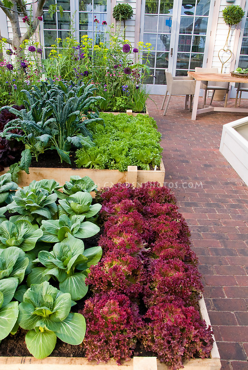 Suburban / urban backyard raised beds vegetable garden on brick patio, with upscale house and French doors visible, patio chair, rows of red lettuces, green lettuce, kale, pak choi, salad greens, flowers, square foot type gardening