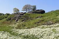 Burgruine Lilleborg (12.Jh.) auf der Insel Bornholm, D&auml;nemark, Europa<br /> castle ruin Lilleborg (12.c.), Isle of Bornholm Denmark