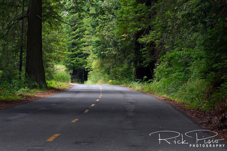 A section of roadway near Benbow, California, that once carried traffic through redwood groves as US 101 is used less often since a 4 lane roadway was built to replace it. Photographed 07/08