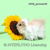 Xavier, ANIMALS, REALISTISCHE TIERE, ANIMALES REALISTICOS, photos+++++,SPCHGUINEA90,#A#, EVERYDAY ,funny
