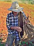 A Cuban  farmer planting yucca near Vinales, Cuba