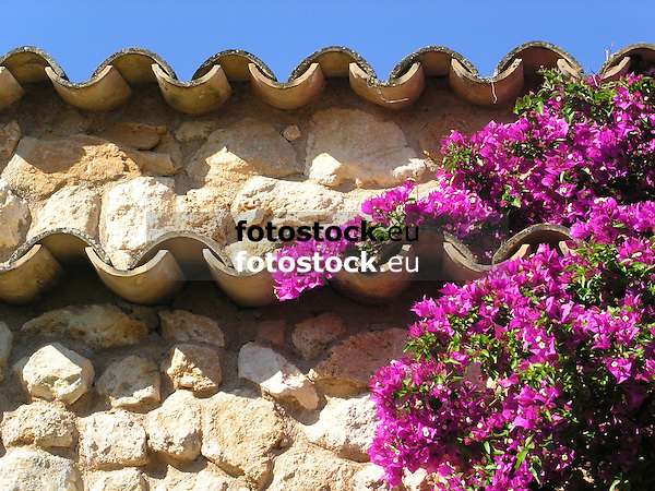 lilac Bougainvillea blossoms under the roof<br />