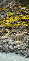 Rocky, wild and milky glacial Waiho river in Franz Josef Glacier valley and moss on rocks, Westland Tai Poutini National Park, South Westland, West Coast, UNESCO World Heritage Area, New Zealand, NZ